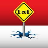 E coli plate Stock Photography