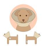 E-collar dog pet Stock Image