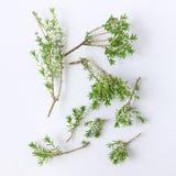 E Concept - aliment biologique, veg images stock