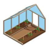 E Croissance de plante de tomate Procédé de plantation Vue intérieure cultivée en serre illustration stock