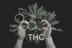 E despancery事务 在大麻,生长大麻的CBD和THC元素 向量例证
