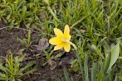 E Die ersten Blumen stockbilder