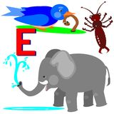 E early bird, earwig, elephant Stock Images