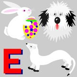 E Easter bunny, english sheepdog, ermine Stock Images