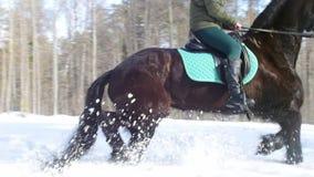 E Een vrouw die een paard berijdt stock videobeelden