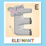 E est pour l'éléphant Lettre E Éléphant, illustration mignonne blanc animal de vecteur de fonds d'image d'alphabet Photo libre de droits