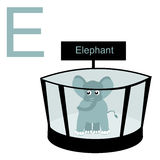 E für Elefanten Scherzt Alphabet Stockfotos