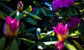 E Fond floral photo libre de droits