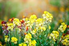 E Fondo floral Jardinería Fotografía de archivo libre de regalías
