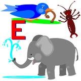 E-früher Vogel, Ohrwurm, Elefant Stockbilder