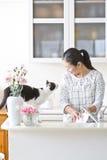 E gatto femminile dell'animale domestico immagini stock libere da diritti