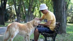 E Goldener Apportierhund r stock video footage