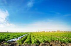 E gr?nsakrader Lantbruk jordbruk Landskap med jordbruks- land Nytt organiskt arkivfoton