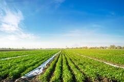 E gr?nsakrader Lantbruk jordbruk Landskap med jordbruks- land Nytt organiskt royaltyfri fotografi