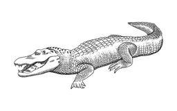 E Grabado, estilo de la plantilla Logotipo blanco y negro, muestra, emblema, s?mbolo ilustración del vector