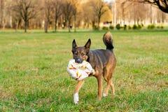 E Harmonijny związek z psem: edukacja i trening obrazy royalty free