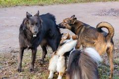 E Harmonijny związek z psem: edukacja i trening Pies sztuka z each inny fotografia royalty free