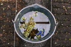 E Het planten in de grond r stock afbeelding