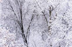 E Horizontal pittoresque de l'hiver photos stock