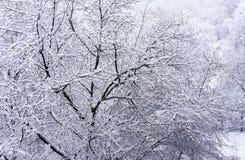 E Horizontal pittoresque de l'hiver images libres de droits