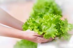 E hydroponics immagine stock libera da diritti
