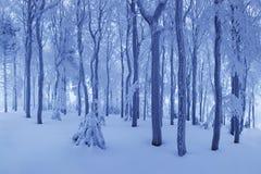 E Ijzig sneeuwweer Mooi de fantasiebos van het de winter boslandschap stock foto's