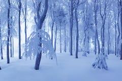 E Ijzig sneeuwweer Mooi de fantasiebos van het de winter boslandschap stock fotografie