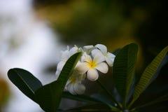 E kolor kwiatów zdjęcia stock