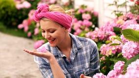 E Kvinnan att bry sig f?r rosa vanliga hortensior Begrepp av omsorg f?r blommor vanlig hortensiapink arkivfilmer