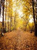E le foglie sono venuto cadendo in rovina immagini stock