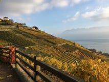 拉沃葡萄园梯田大阳台、湖Léman和山的看法在背景,瑞士中 免版税库存照片
