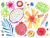 E Melograno, kiwi, pitahaya, frutto della passione, kiwano, mangostano Insieme disegnato a mano dell'acquerello illustrazione di stock