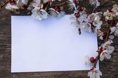 E miejsce tekst Poj?cie wiosna zdjęcia stock