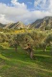 E montagne di olivo Immagini Stock Libere da Diritti