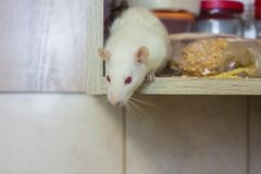 E muis witte rode ogen Symbool royalty-vrije stock afbeelding