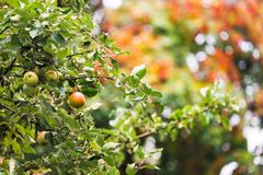 E Ny vegetarisk sund mat Bakgrund f?r organiskt lantbruk royaltyfri bild