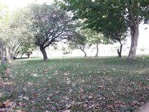e o outono chegou no hemisfério sul imagens de stock