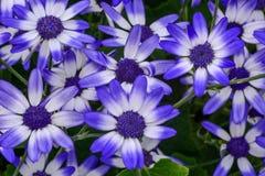 E och vita blommor mot ett djupt - gräsplan lövrik bakgrund Fotografering för Bildbyråer