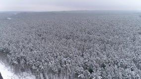 E Paesaggio di inverno nella foresta stock footage