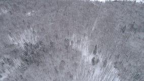 E Paesaggio di inverno nella foresta video d archivio