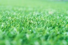 E r трава свежей весны зеленая стоковые фотографии rf