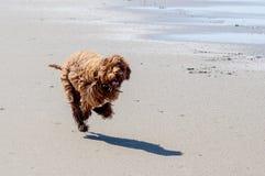 跑在海滩 库存照片