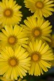 与黄色花的自然夏天背景 免版税库存图片