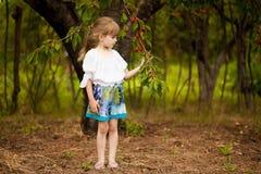 E r Barnhackakörsbär i fruktträdgård arkivbilder