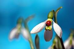 E r De eerste de lentebloemen Komst van de lente royalty-vrije stock afbeelding