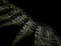 E r Helecho tropical fotografía de archivo libre de regalías