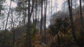 Δάση καλυμμένα με τέφρα μετά από πυρκαγιά Καπνός που ανεβαίνει από το έδαφος μετά από δασικές πυρκαγιές, Haze στην ατμόσφαιρα Πυρ φιλμ μικρού μήκους