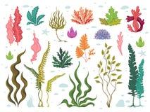 ?? 海水中植物、海洋珊瑚礁和水生海带,手拉的海洋植物群集合 传染媒介海草动画片 库存例证