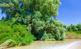 从汽艇的看法向美好的自然和河 免版税库存图片
