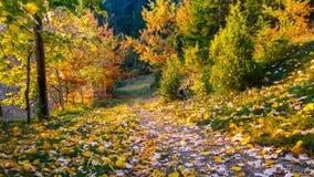 美好的秋天风景 10月颜色 树的秋天颜色秀丽  五颜六色的风景在秋天 免版税库存图片